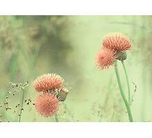 Yesterday's garden Photographic Print