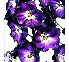 Delphinium - Postcard by Michelle Bush