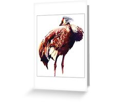 Sandhill Crane #1 - Postcard Greeting Card