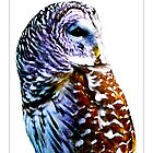 Barred Owl - Postcard by Michelle Bush