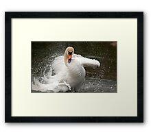 More swan attitude ! Framed Print