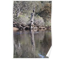 Avon river Reflections Poster