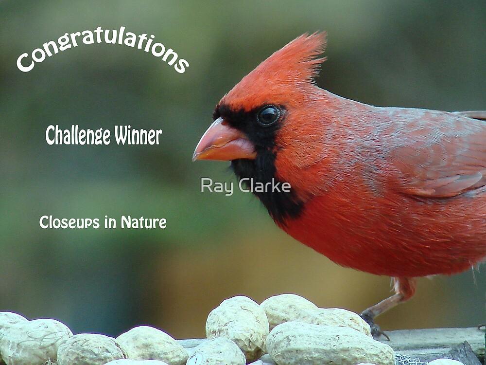 Challenge winner by Ray Clarke