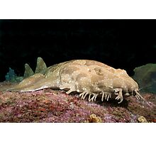 Spotted Wobbegong at the entrance to Sydney Harbour Photographic Print