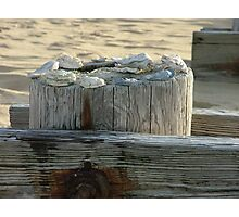 Shells of Ocean View Photographic Print