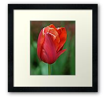 Reddy and Waiting Framed Print