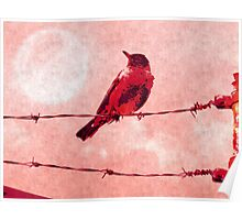 Bird on the Wire Poster