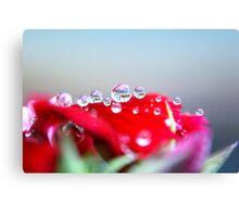Drops Of Love Canvas Print