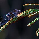 Dragonfly 2 by Charlie