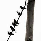 Birds On A Wire by ajgosling