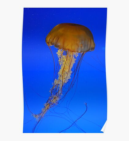 BIG Jelly Poster