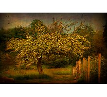 Tree And Fence Photographic Print