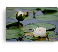 Water Blossoms Canvas Print