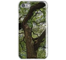 Elm Tree on 20th Street iPhone Case/Skin