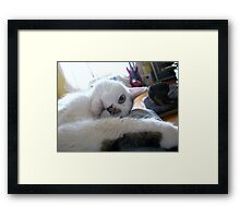 Cartoon Cat Framed Print