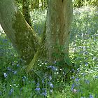 Bluebells by newbeltane