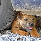 Tyred terrier by Alan Mattison IPA