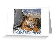 Tyred terrier Greeting Card