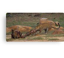 Leopard Draging Kill Canvas Print