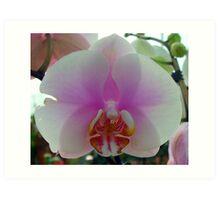Silky petals Art Print
