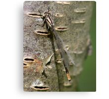 A Damsel in Camouflage Metal Print