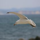 Seagull in Flight by Capriblue