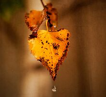 Autumn Leaves by Ewan Arnolda