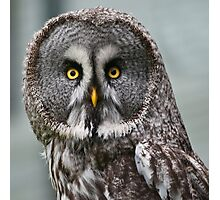 Great Grey Owl (Strix nebulosa) Photographic Print