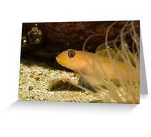Blenny behind the 'screen'. Greeting Card