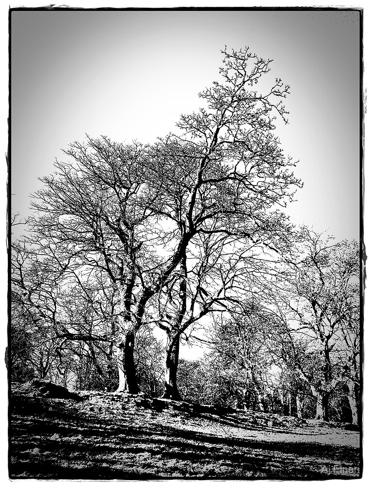 The Trees At  Stobo Castle. by Aj Finan
