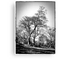 The Trees At  Stobo Castle. Canvas Print