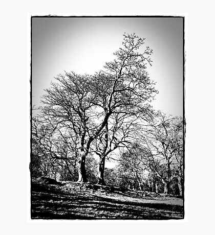 The Trees At  Stobo Castle. Photographic Print