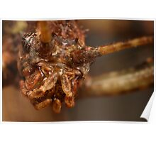 stick insect up close Poster