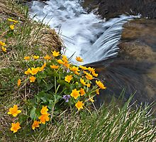 Flowers and Waterstream by Oleksii Rybakov