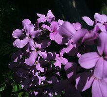 Purple Flowers by johntbell