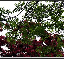 Red Tree Blossoms in Drop Shadow Frame by BlueMoonRose