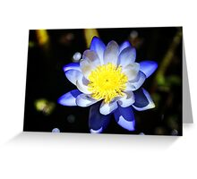 Waterlily In Blue Greeting Card