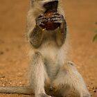 Monkey business by Explorations Africa Dan MacKenzie