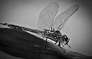 Dragonfly 2 by Craig Hender
