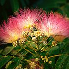 """""""The Beautiful Mimosa Tree"""" by franticflagwave"""