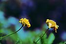 Cute Yellow Flowers by Denis Marsili