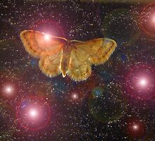 Moth and Constellations by Linda Woods