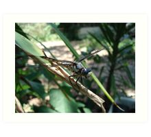 One very jazzy dragonfly... Art Print