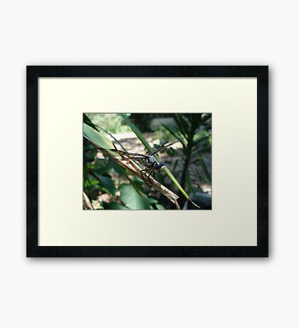 One very jazzy dragonfly... Framed Print