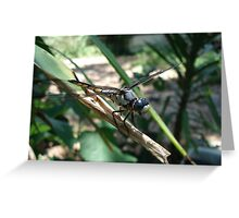 One very jazzy dragonfly... Greeting Card