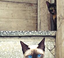 Cats On the Stairs by Kent DuFault