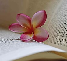 Frangipani And Book by Evita