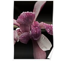 Spring Magnolia And  RainDrops  Poster
