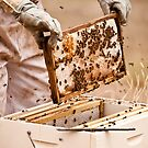 bee keeping by Helen  Page