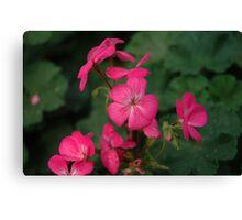 gardenia flower Canvas Print